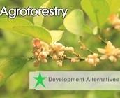 Agroforestry (English)